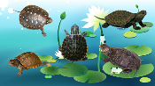 Other Pond Turtles